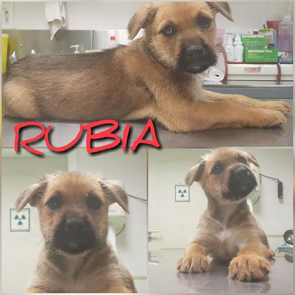 RUBIA