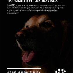 Recomendaciones en relación al COVID-19 y los animales de compañía