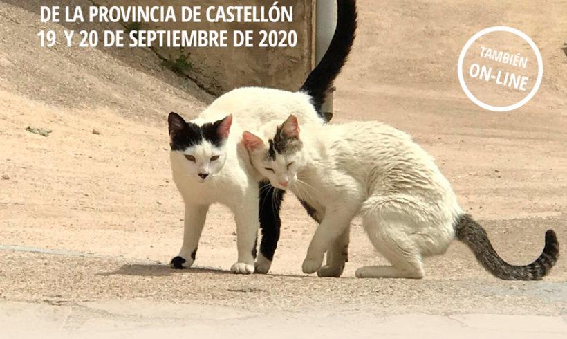 II Jornada Felina de Castellón