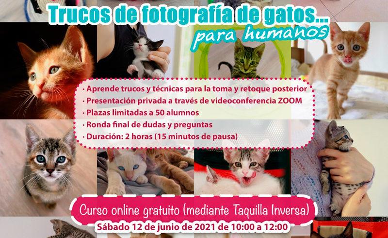 CURSO ONLINE – Trucos de fotografía de gatos para humanos